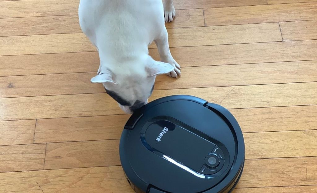 A dog sniffing a robot vacuum on the ground