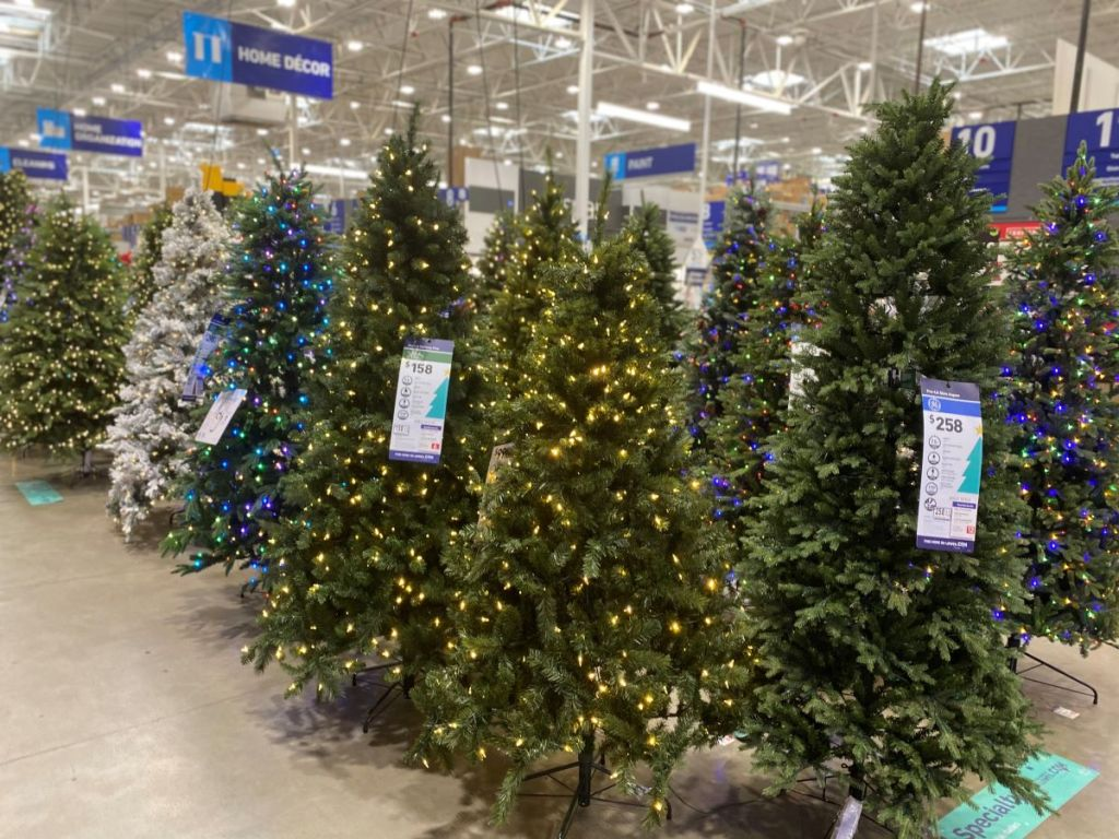 display of Christmas trees at Lowe's