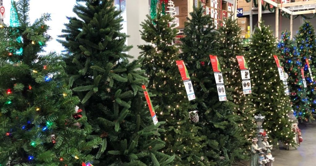 row of Christmas trees at Lowe's