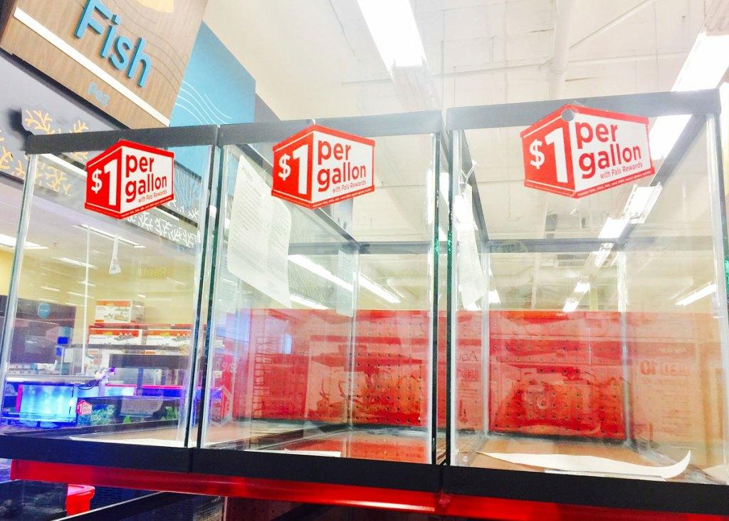 glass aquarium tanks on red shelf at Petco