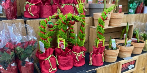 Grinch-Inspired Grump Christmas Trees Are Back & Under $8 at Trader Joe's