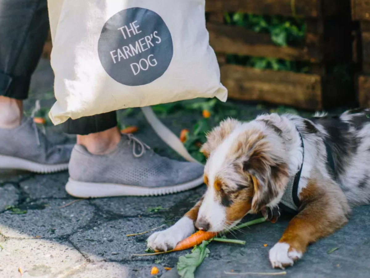 dog eating a carrot with a person next to him with a bag