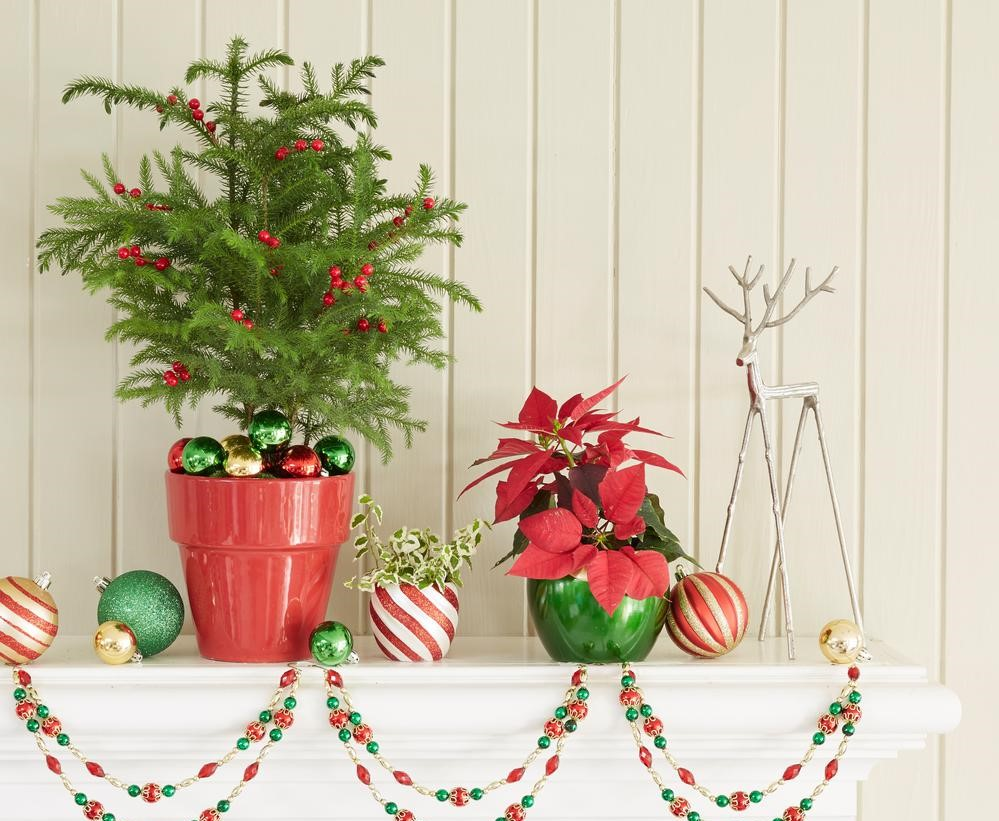 plants on a mantle with holiday decorations