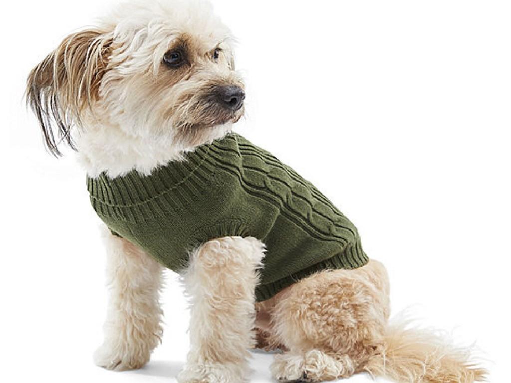 little dog wearing green sweater