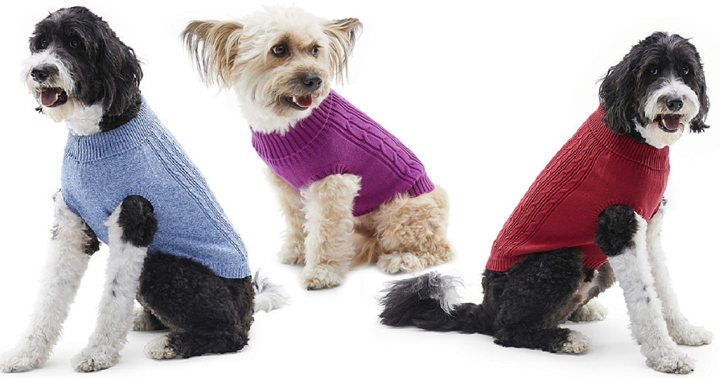 dogs wearing sweaters