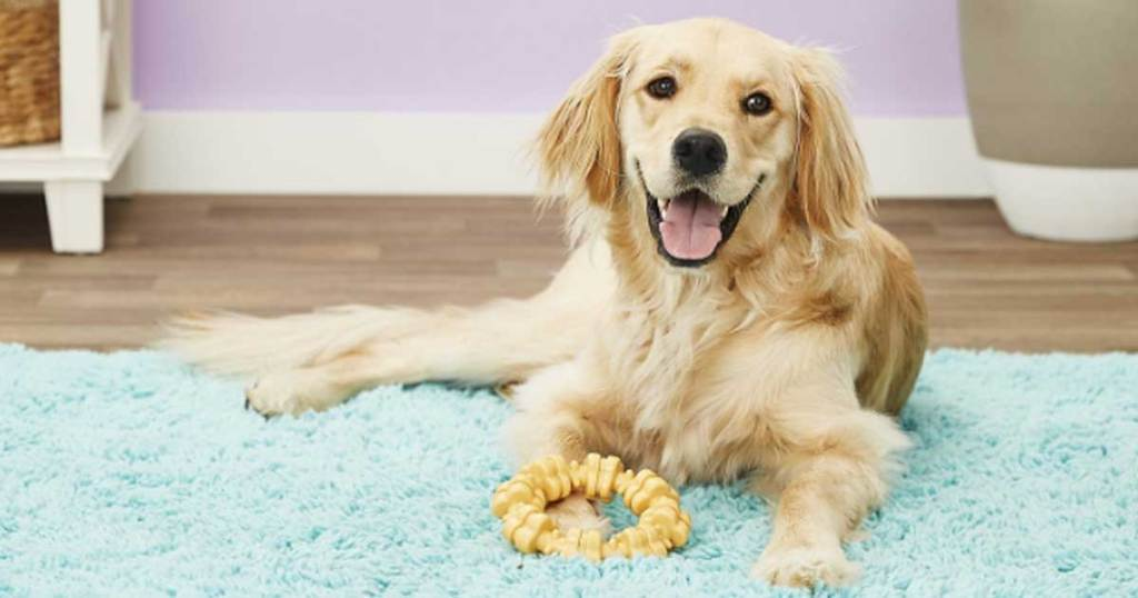 dog laying on rug with toy