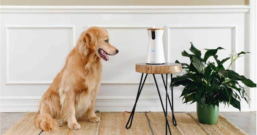 dog looking into automatci camera on plant stand