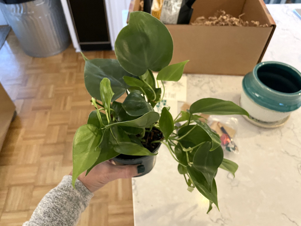 holding plant from plant of the month club