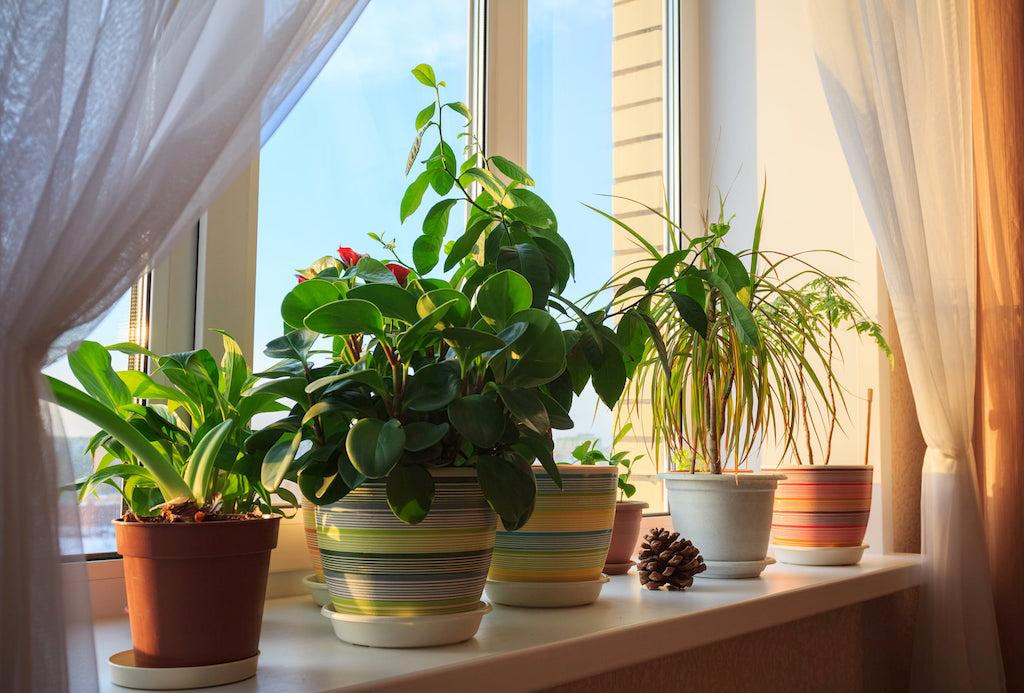 indoor plants on window ledge
