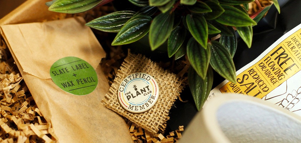 plant club member box with pin