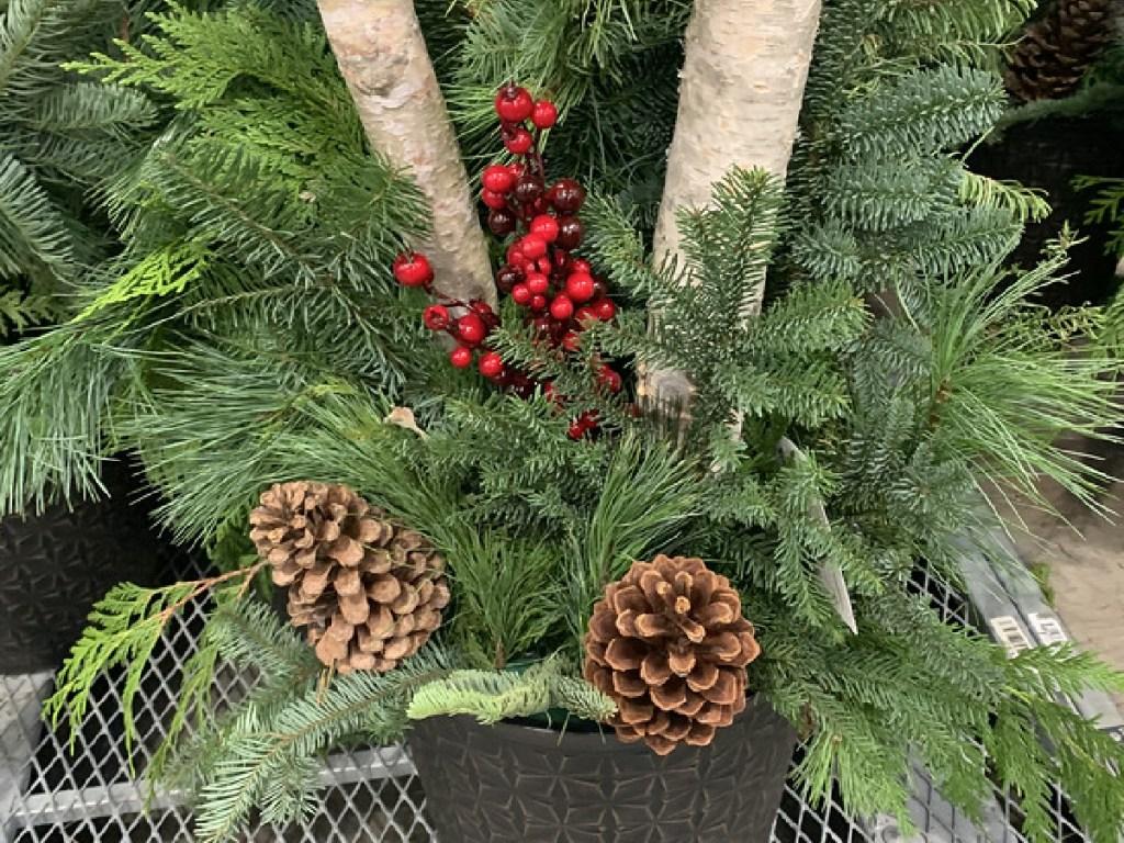 tanaman pot besar dengan pinus, beri dan batang kayu