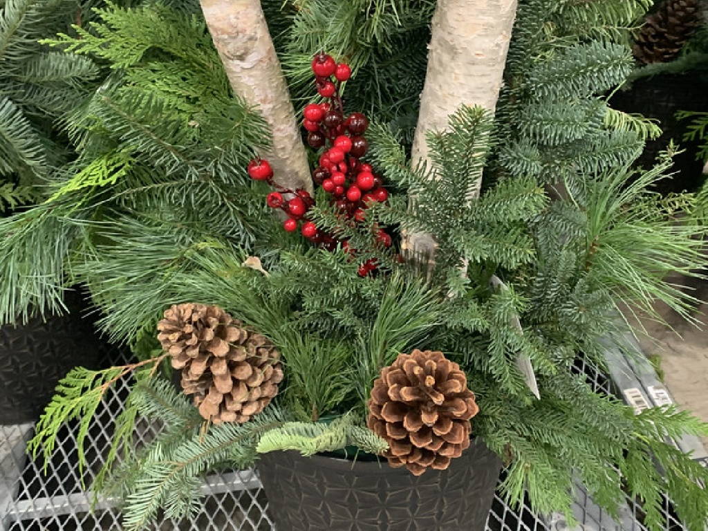 large potted plant with pine, berries and logs