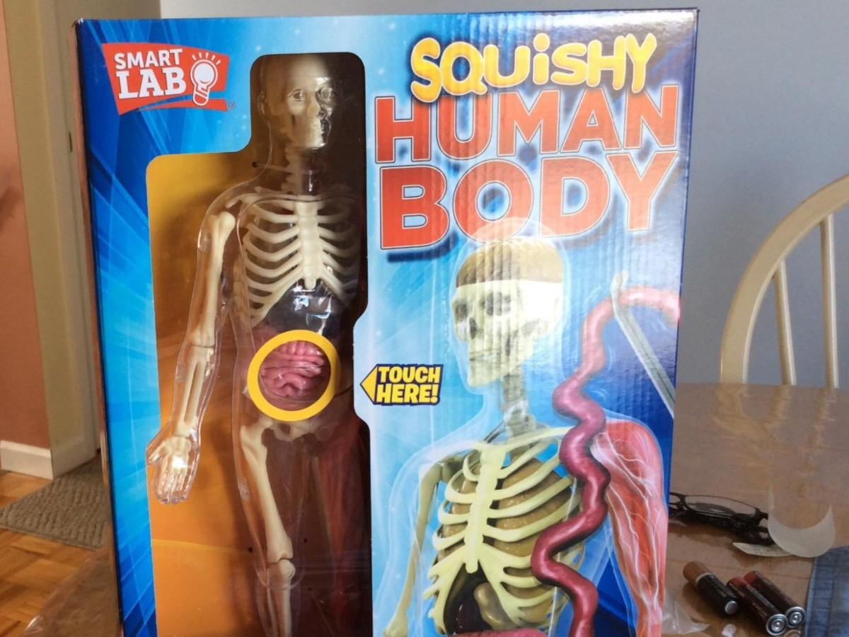 Squishy Human Body educational toy in box