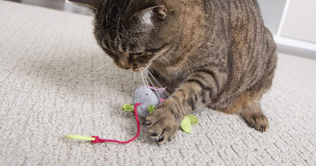 cat playing with smartykat cat toy