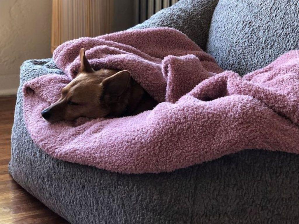 dog laying on pink blanket
