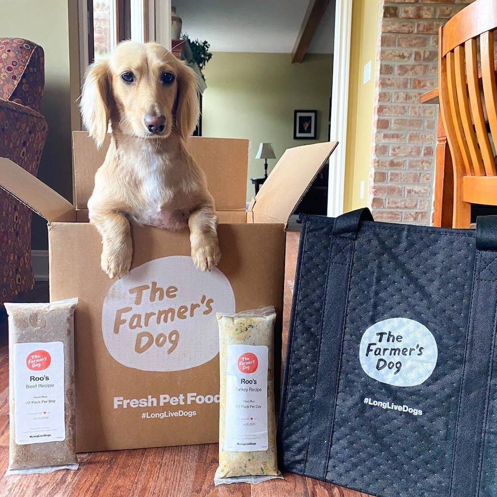 dog popping out of The Farmer's Dog box