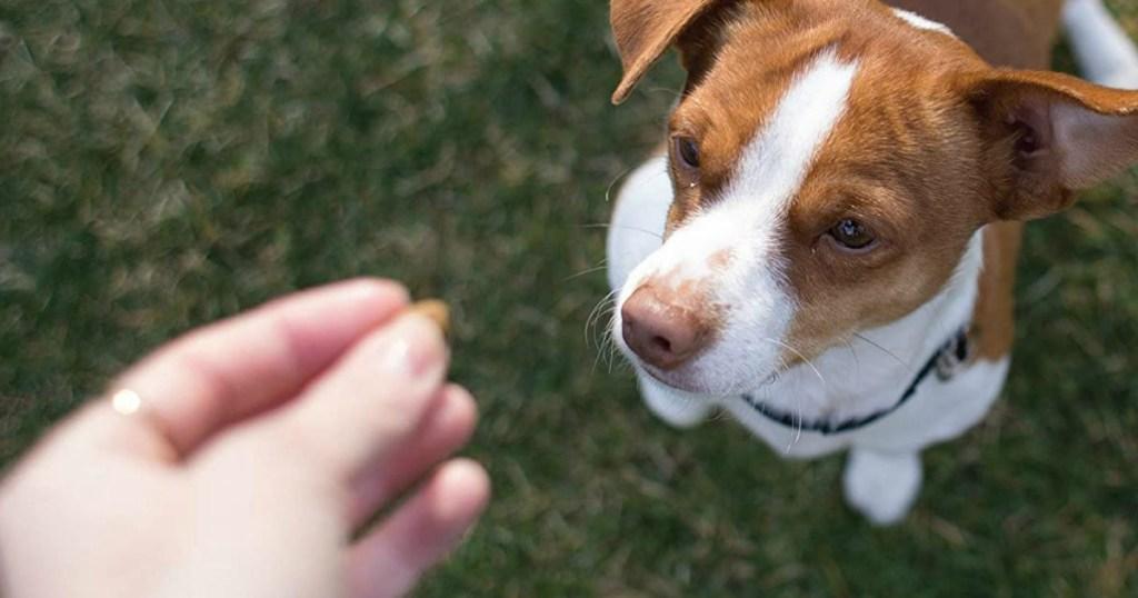 man feeding dog a treat