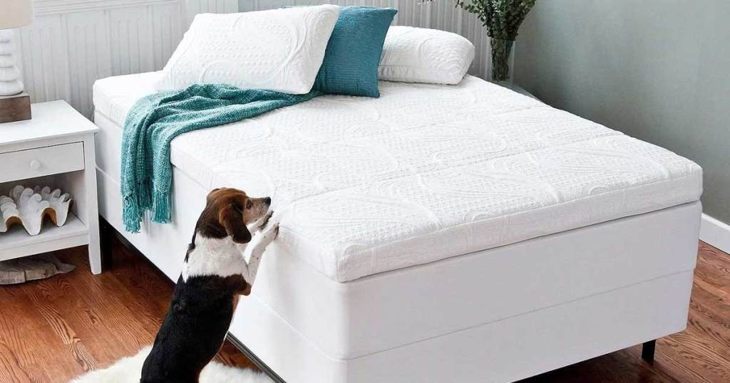 bed with mattress topper in a bedroom and dog