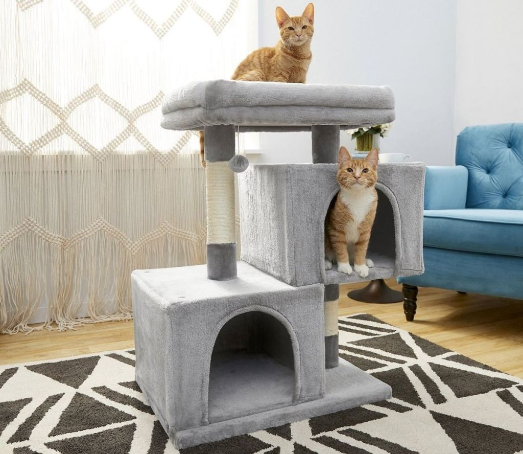 cats on a tower