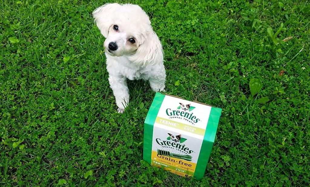 anjing duduk di samping kotak makanan