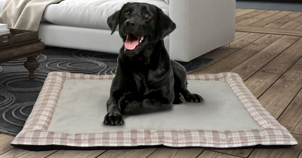 dog laying on a pet bed