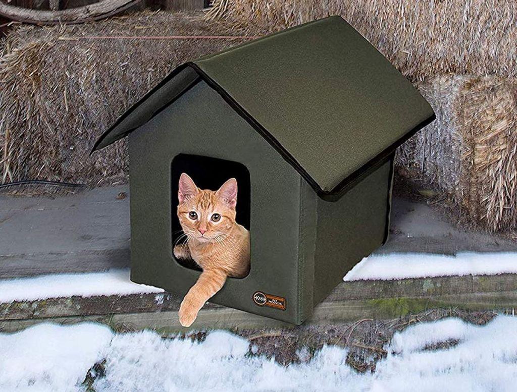 kucing di rumah kucing