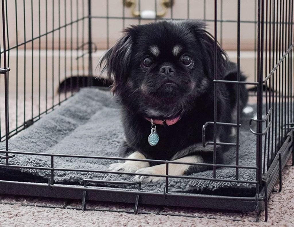 dog laying on a mat