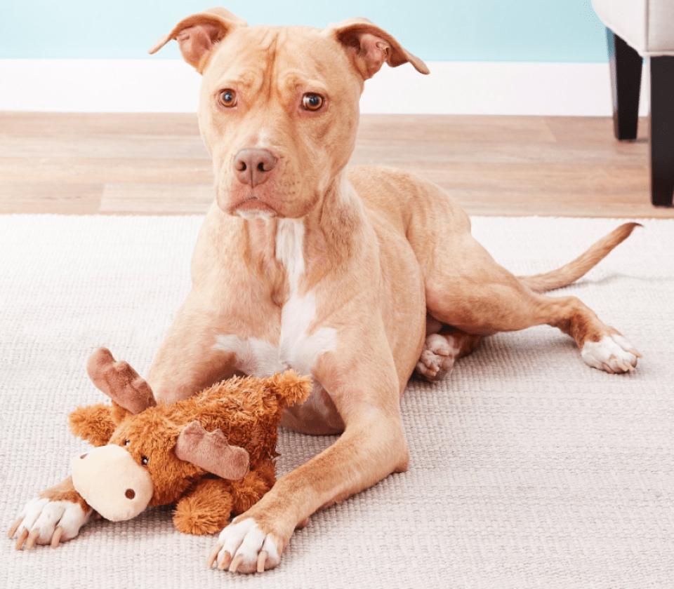 anjing dengan mainan rusa