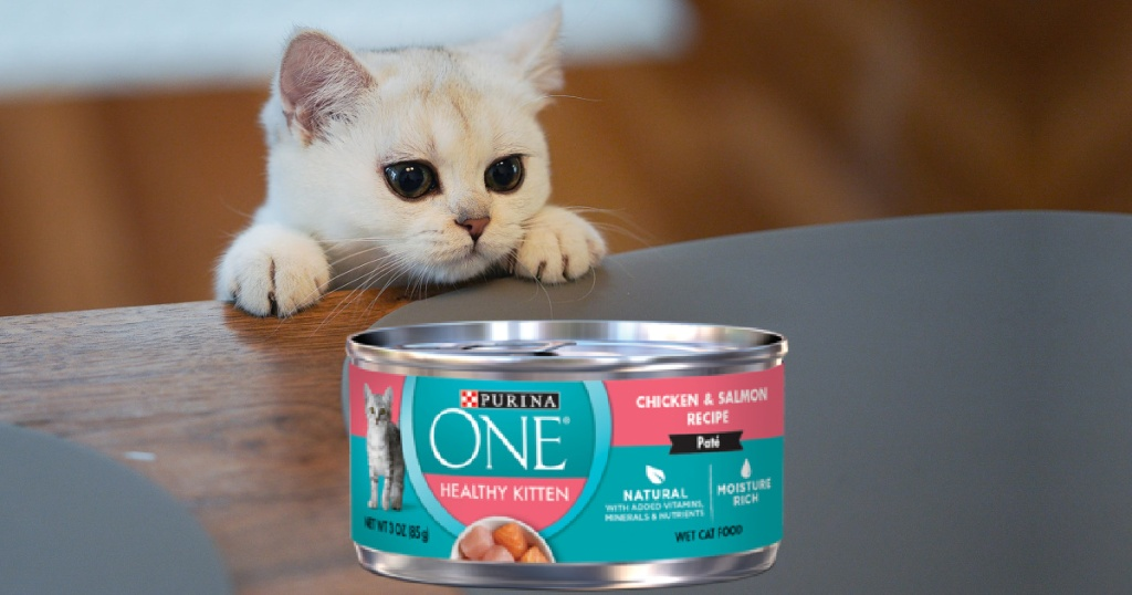 kitten leaning on table with cat food can