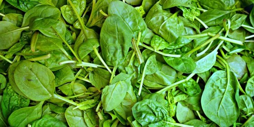 Baby Spinach Recalled Due to Potential Salmonella Contamination