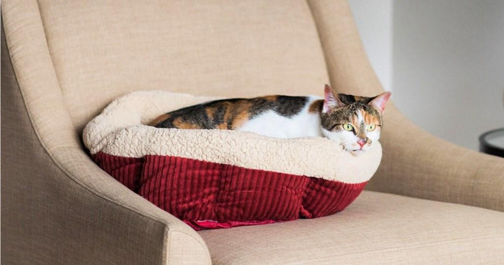 cat on aspen pet bed