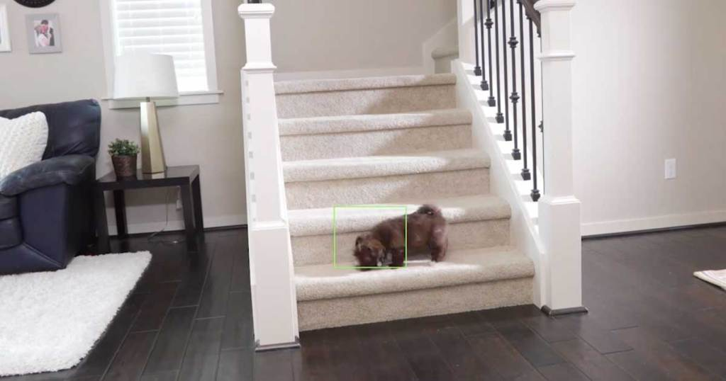 dog on stairs in house being watched on camera