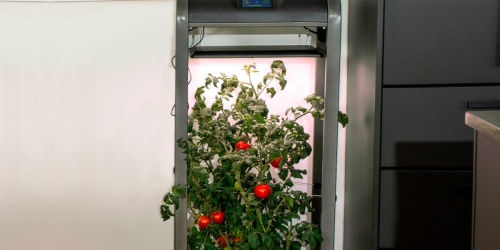 50% Off AeroGarden XL Garden System on BestBuy.com + Free Shipping | Grow Veggies In Your Home