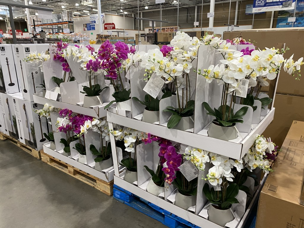 Orchids on display in Costco warehouse