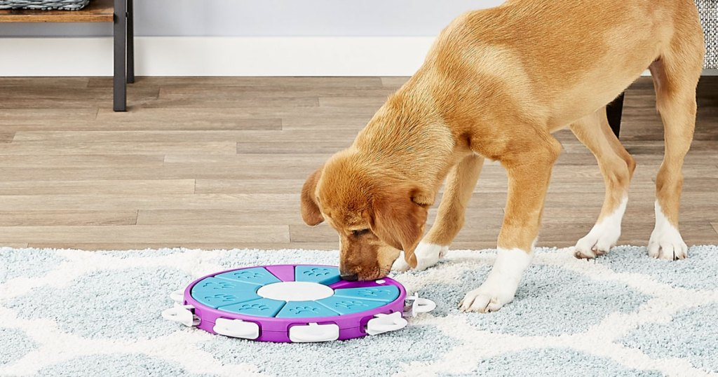 golden colored dog playing with puzzle treat toy on floor