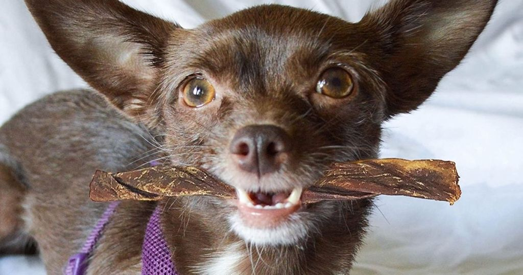 dog holding a bully stick in its mouth