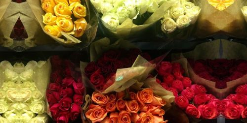 50-Count Roses Only $39.98 Shipped on Sam's Club | Valentine's Day Idea