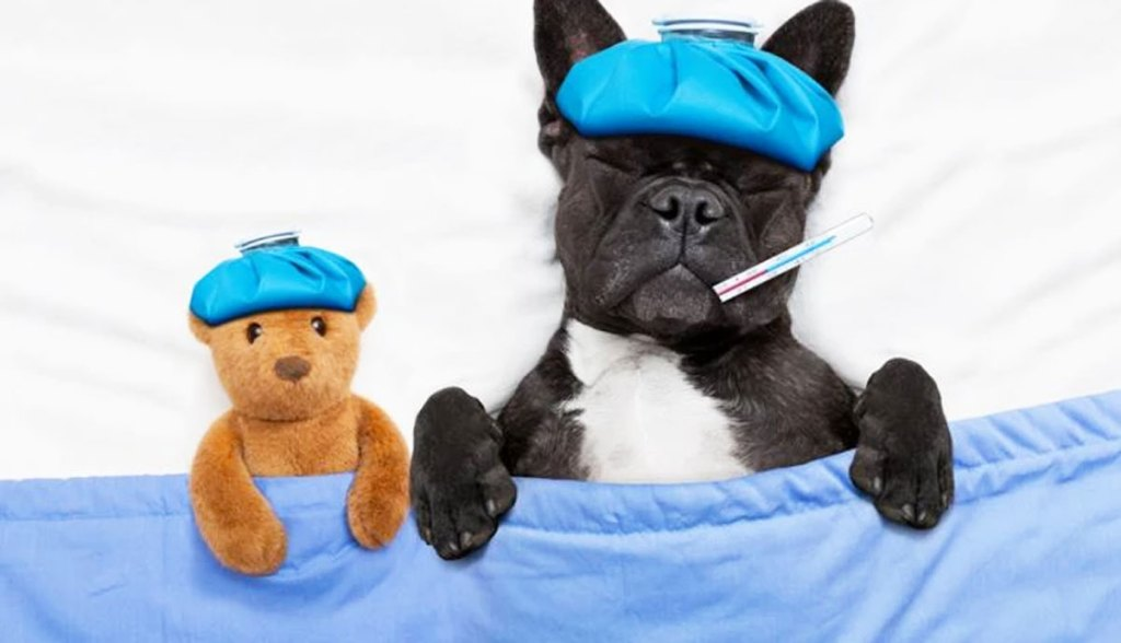 dog in bed next to teddy bear with thermometer in mouth