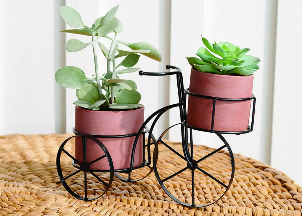 bike planter with two plants