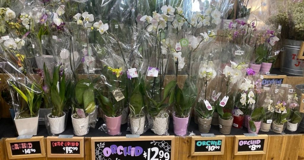 Trader Joe's Orchids on display w signs