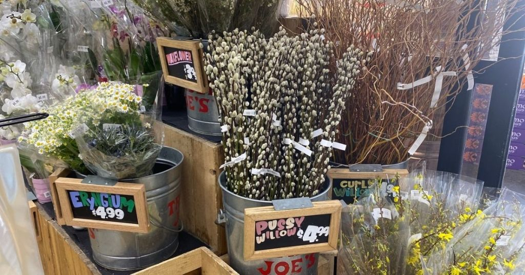Trader Joe's Pussy Willow on display
