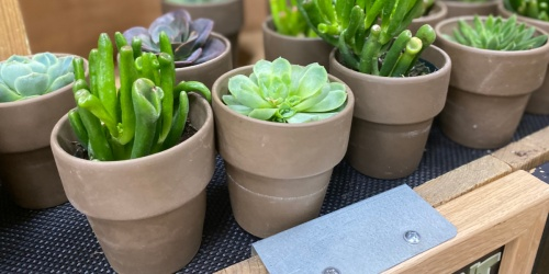 Trader Joe's Floral Department is in Full Bloom | Succulents From $3 & More