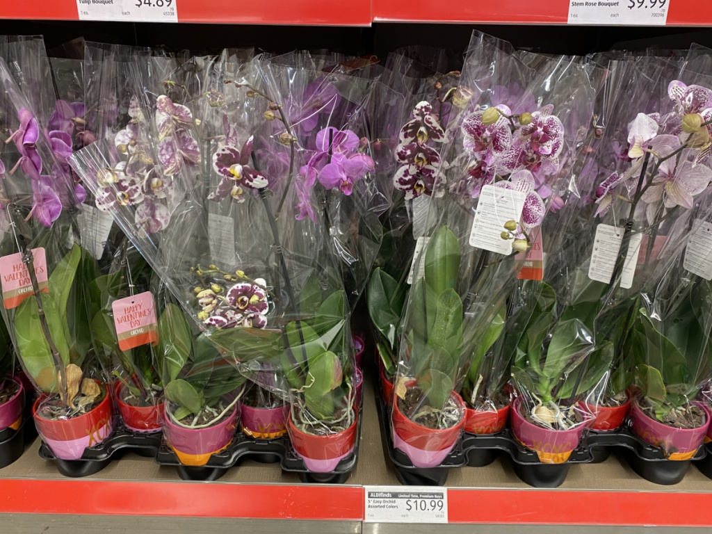 potted orchid plants at ALDI