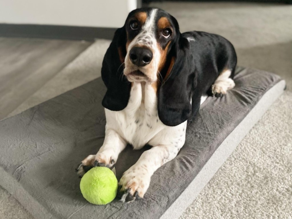 dog on memory foam bed with green ball
