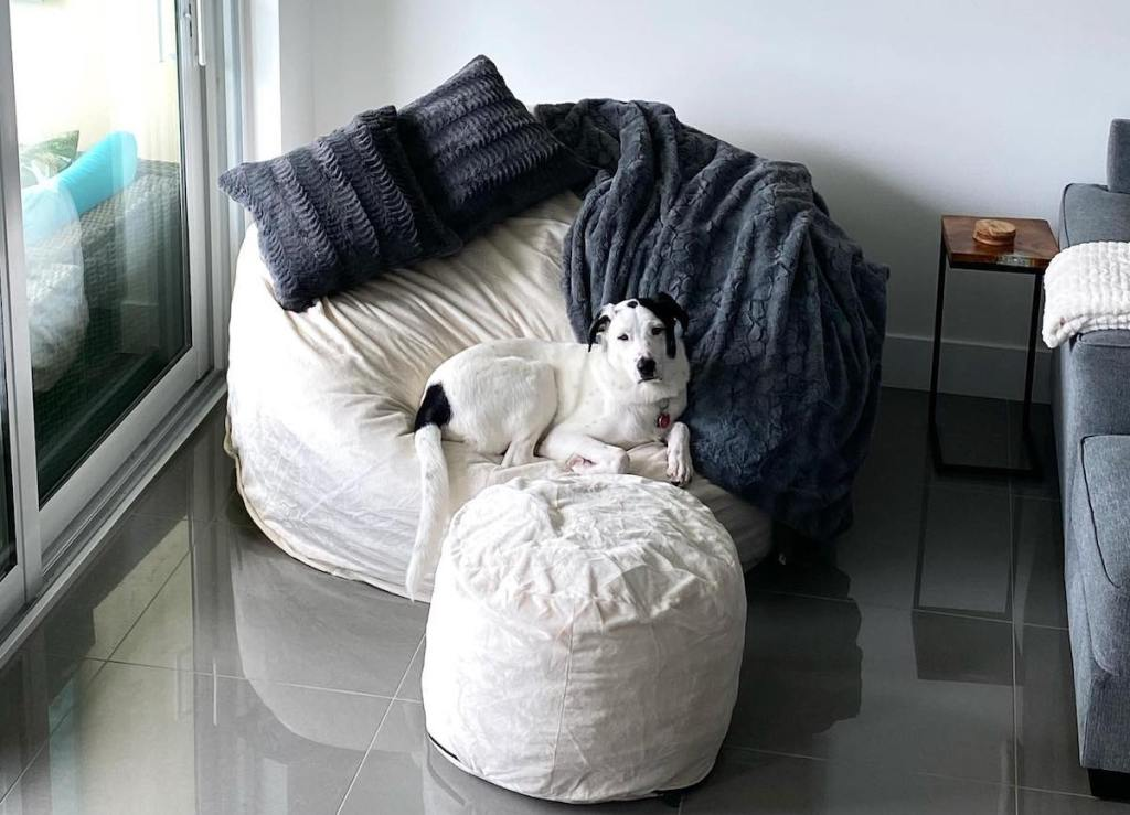 dog sitting on huge white bean bag chair with matching ottoman