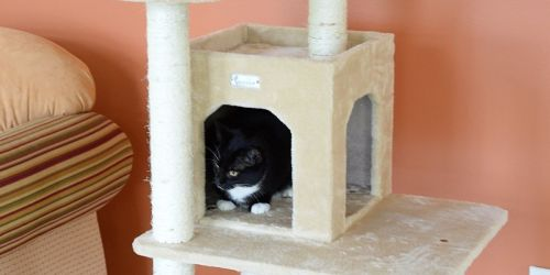 57″ Cat Tree & Condo Only $54.63 Shipped on Chewy.com (Regularly $100)