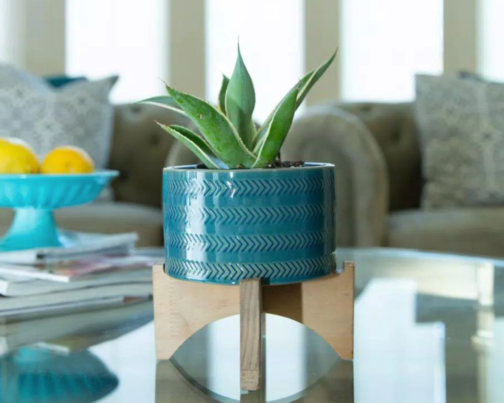 blue planter with wood stand and plant in it