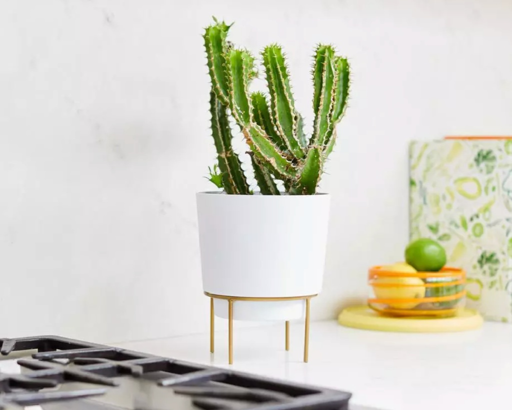 gold metal plant stand with cactus