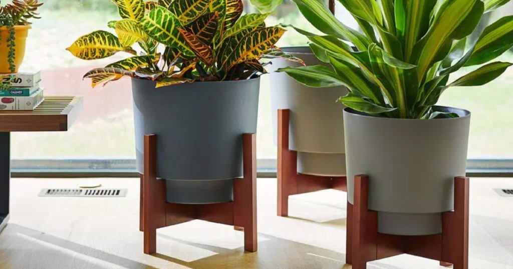 variety of planters with plants