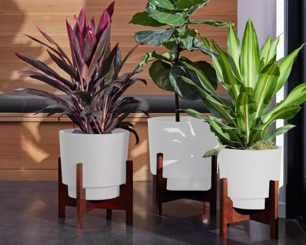 three white planters